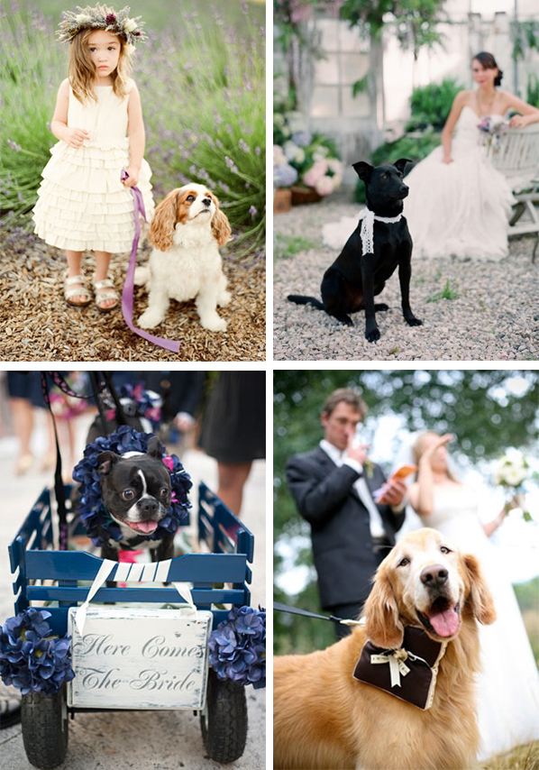 dogs in weddings tips los angeles wedding planning the bridal bar